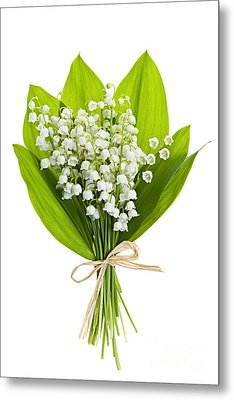 Lily-of-the-valley Bouquet Metal Print by Elena Elisseeva