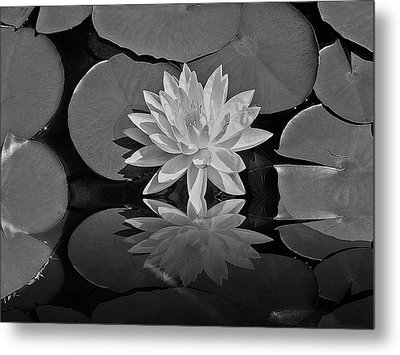 Lily On The Pond Metal Print