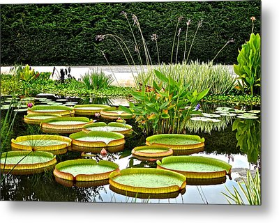 Lily Pad Garden Metal Print by Frozen in Time Fine Art Photography