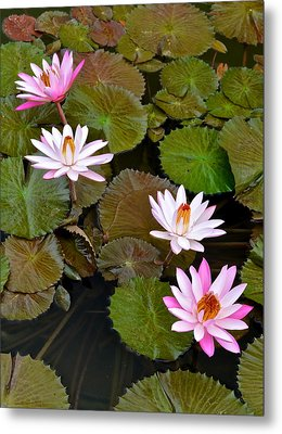 Lily Pad Haven Metal Print by Frozen in Time Fine Art Photography