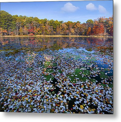 Lily Pads And Autumn Leaves Metal Print