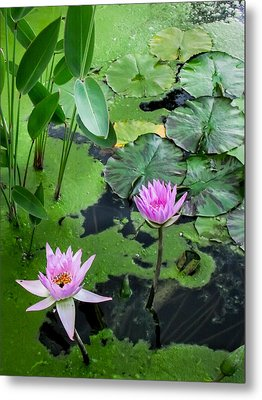 Lily Pads And Flowers Metal Print