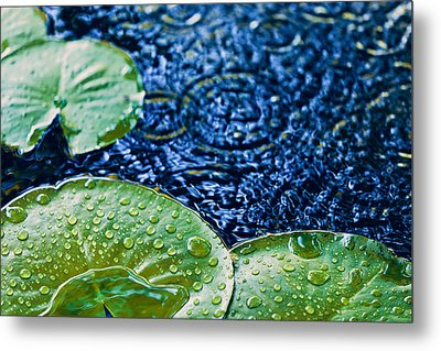 Lily Pads Metal Print by Debi Bishop