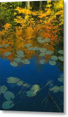 Lily Pads In Autumn Metal Print