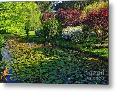 Lily Pond And Colorful Gardens Metal Print by Kaye Menner