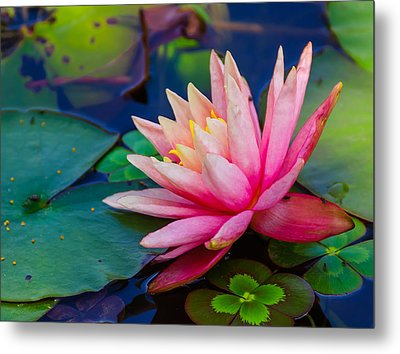 Metal Print featuring the photograph Lily Pond by John Johnson