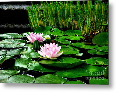 Metal Print featuring the photograph Lily Pond by John S