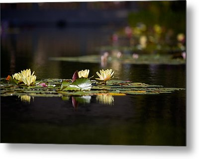 Lily Pond Metal Print by Peter Tellone