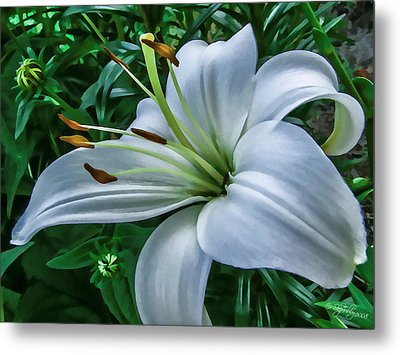 Metal Print featuring the photograph Lily by Skip Tribby