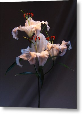 Metal Print featuring the photograph Lily Variation #01 by Richard Wiggins