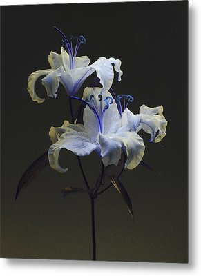 Metal Print featuring the photograph Lily Variation #03 by Richard Wiggins