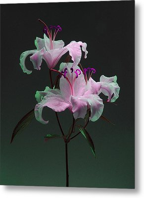 Metal Print featuring the photograph Lily Variation #04 by Richard Wiggins