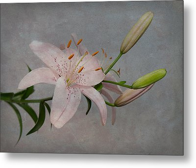 Pink Lily With Texture Metal Print by Patti Deters