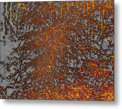 Limbinosity Metal Print by Jo-Anne Gazo-McKim