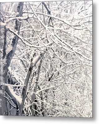 Limbs Covered With Snow Metal Print