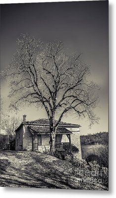 Lime Tree Metal Print by Tony Priestley