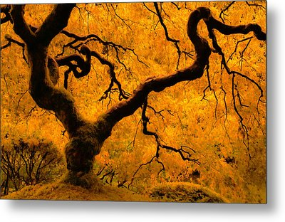 Limned In Light Metal Print