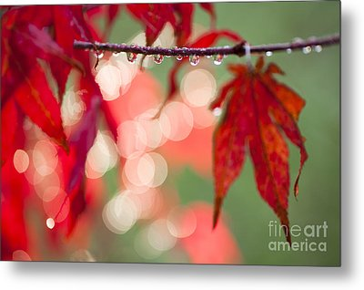 Line Of Reflections Metal Print by Anne Gilbert