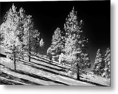 Lined Up On The Crater Metal Print by John Rizzuto
