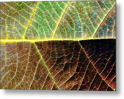 Lines Of Life Metal Print by Dave Bosse