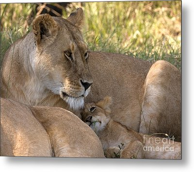 Metal Print featuring the photograph Lion And Cub by Chris Scroggins