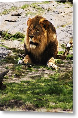 Metal Print featuring the photograph Lion At Rest by B Wayne Mullins