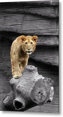 Lion Cub Metal Print by Cathy Harper