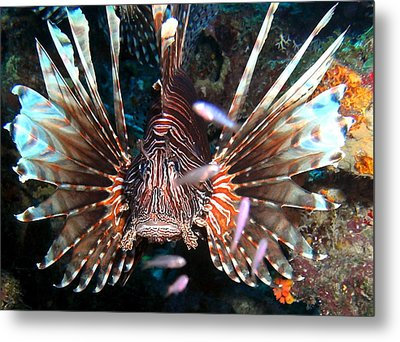 Metal Print featuring the photograph Lion Fish - En Garde by Amy McDaniel