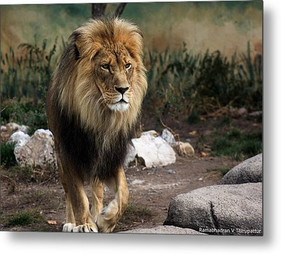 Metal Print featuring the photograph Lion King by Ramabhadran Thirupattur