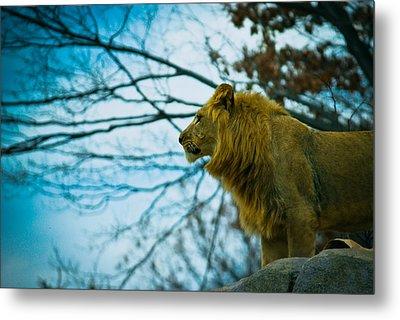 Lion King Metal Print
