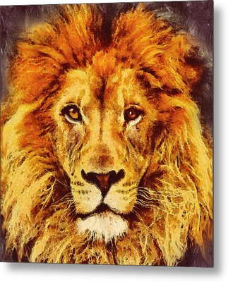 Lion Of Africa Metal Print