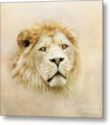 Metal Print featuring the photograph Lion Portrait by Roy  McPeak