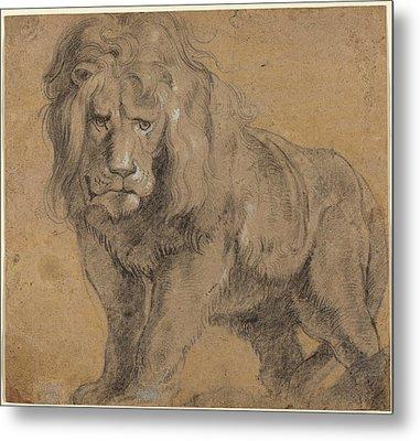 Lion Sketch Metal Print by Paul Ruebens