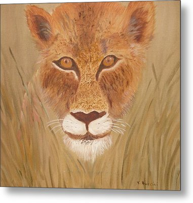Lioness In Waiting Metal Print