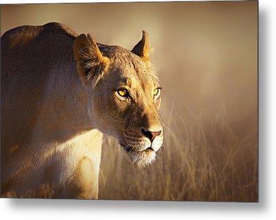 Lioness Portrait-1 Metal Print by Johan Swanepoel