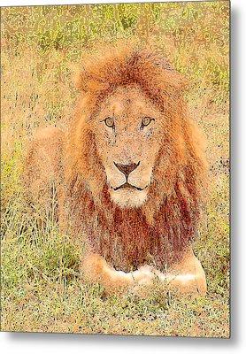 Lion's Eyes Metal Print