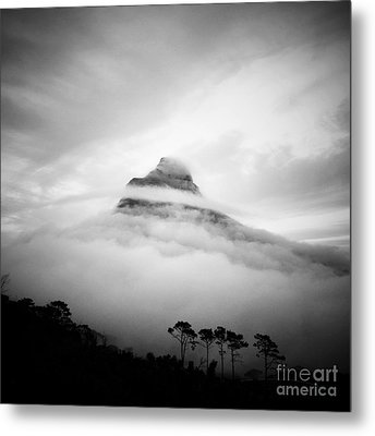 Lions Head Metal Print by Neil Overy