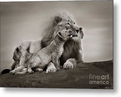 Metal Print featuring the photograph Lions In Freedom by Christine Sponchia