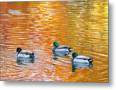 Metal Print featuring the photograph Liquid Autumn by Carl Amoth
