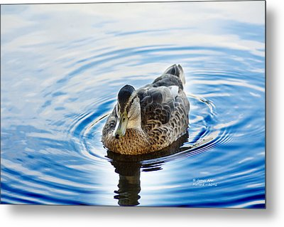 Liquid Blue Mallard Metal Print by James Ahn