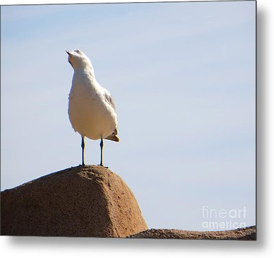 Metal Print featuring the photograph Listen-up by Joy Hardee