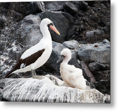 Listen Up Son Metal Print by William Beuther