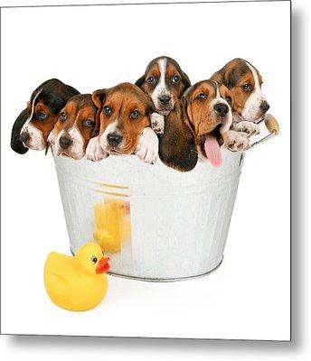 Litter Of Puppies In A Bathtub Metal Print by Susan Schmitz