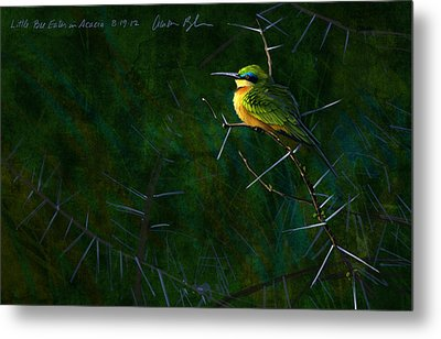 Little Bee Eater Metal Print by Aaron Blaise