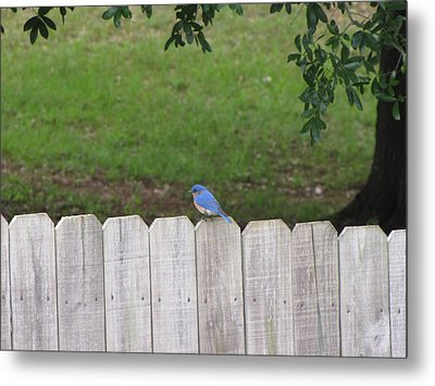 Metal Print featuring the photograph Little Bird by Beth Vincent