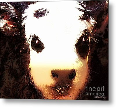 Little Black Baldy Metal Print by Barbara Chichester