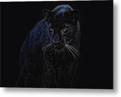 little black Jag Metal Print by Joachim G Pinkawa