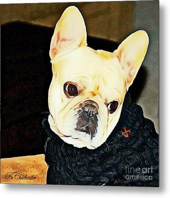 Little Black Sweater Metal Print by Barbara Chichester
