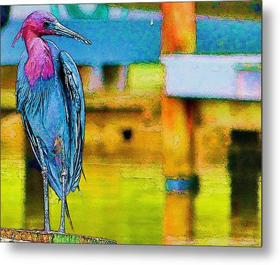 Metal Print featuring the photograph Little Blue Heron Posing by Pamela Blizzard