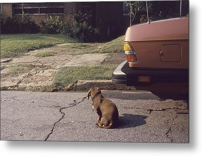 Little Brown Dog Metal Print by John Hines